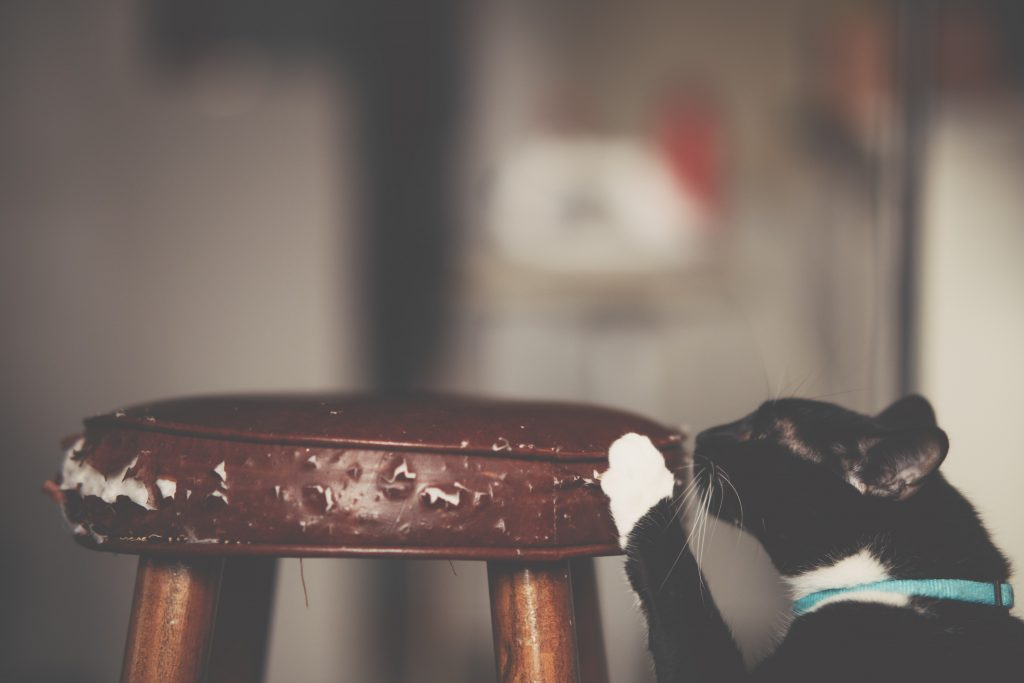 Cat scratching stool