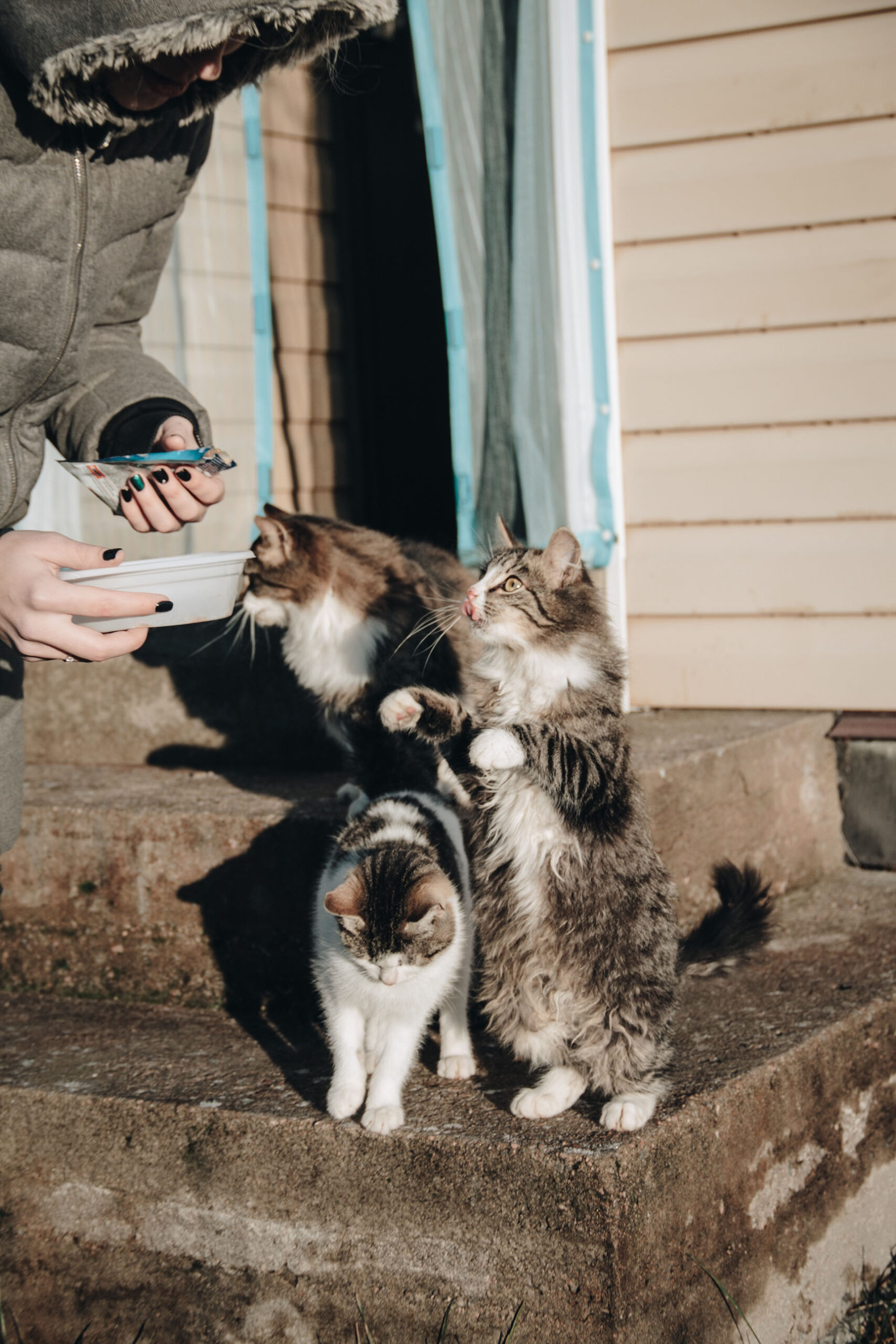 BECOME A FRIEND TO COMMUNITY CATS