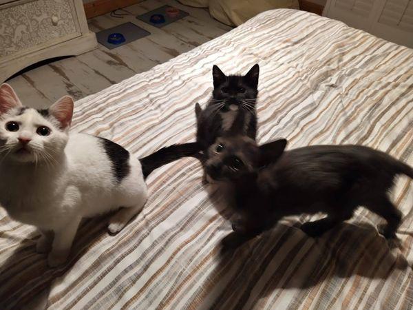 Spike, Xander & Dancer